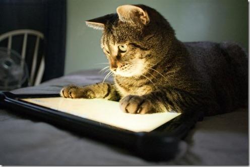 Gato usando una tableta